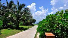 Free Vegetation, Sky, Tree, Palm Tree Royalty Free Stock Photos - 124418718