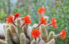 Free Plant, Flowering Plant, Vegetation, Cactus Royalty Free Stock Photos - 124418728