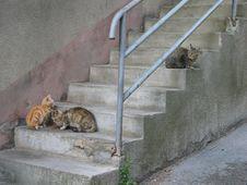 Free Fauna, Wall, Small To Medium Sized Cats, Cat Royalty Free Stock Image - 124418786