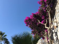 Free Plant, Flower, Sky, Pink Stock Photo - 124419050