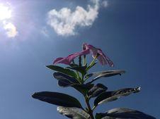 Free Sky, Pink, Flora, Plant Stock Photos - 124419073