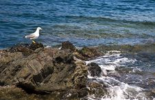 Free Sea, Body Of Water, Bird, Coast Stock Photo - 124419530