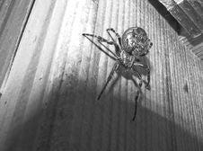 Free Arachnid, Spider, Black, Black And White Stock Photography - 124419622