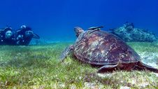 Free Sea Turtle, Turtle, Ecosystem, Marine Biology Royalty Free Stock Images - 124708369