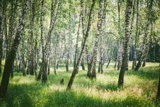 Free Ecosystem, Tree, Woodland, Grove Stock Photography - 124708542