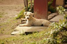 Free Dog Breed, Dog, Dog Like Mammal, Grass Royalty Free Stock Images - 124708839