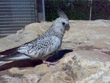 Free Bird, Fauna, Parrot, Beak Stock Photos - 124771653