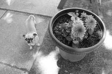 Free Dog Like Mammal, Dog, Black And White, Mammal Stock Photography - 124771812