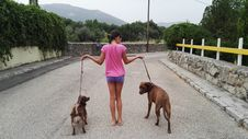 Free Dog, Dog Like Mammal, Dog Walking, Dog Breed Royalty Free Stock Photo - 124771925