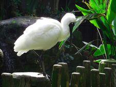 Free Bird, Fauna, Beak, Egret Stock Image - 124771931