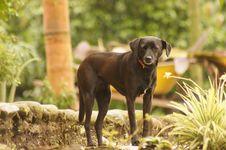 Free Dog Breed, Dog, Dog Like Mammal, Grass Stock Image - 124772021