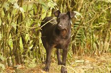 Free Dog Breed, Dog, Dog Like Mammal, Grass Royalty Free Stock Image - 124772166