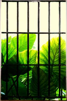 Free Green, Leaf, Window, Net Stock Photos - 124772423