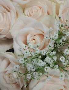 Free Flower, Flower Bouquet, Rose, Rose Family Stock Photos - 124772623