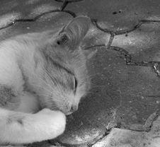 Free Cat, Black And White, Black, Mammal Stock Photos - 124938833