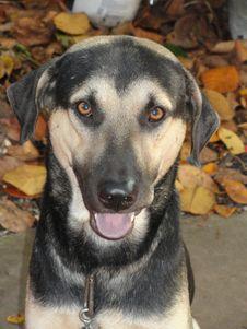 Free Dog, Dog Breed, Dog Like Mammal, Street Dog Royalty Free Stock Image - 124939066