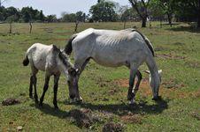Free Pasture, Horse, Mare, Horse Like Mammal Royalty Free Stock Photography - 124939277