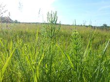 Free Ecosystem, Grassland, Grass, Crop Stock Photo - 124939450