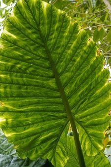 Free Leaf, Plant, Vegetation, Biome Stock Images - 124939454