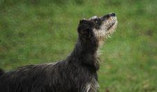 Free Dog Breed, Dog Like Mammal, Dog, Grass Royalty Free Stock Photography - 124939667