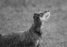 Free Black And White, Dog Like Mammal, Dog Breed, Dog Stock Image - 124940261