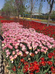 Free Flower, Plant, Flowering Plant, Botanical Garden Stock Photos - 124940303