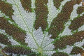 Free Leaf Detail. Royalty Free Stock Photography - 1251807