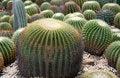 Free Cacti Royalty Free Stock Photos - 1254048