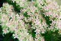 Free Tiny Flowers Stock Photo - 1256070