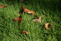 Free Leaves And Grass Royalty Free Stock Images - 1257079