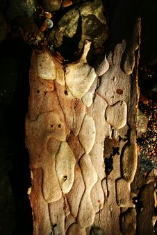 Free Piece Of Bark Royalty Free Stock Photography - 1250687