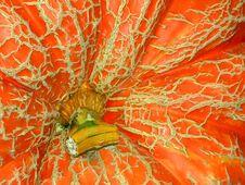 Free Giant Pumpkin Royalty Free Stock Photo - 1250845