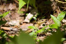 Free Snake Stock Image - 1250981