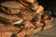 Free Crabs Stock Photo - 1251630