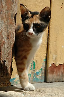 Free Cat And Wooden Door Stock Photos - 1251673