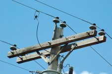 Free Transmission Line Uprights Royalty Free Stock Photography - 1251887