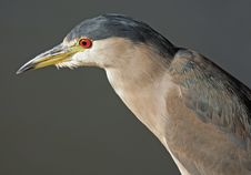 Free Beautiful Heron Stock Photos - 1254153