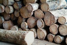Free Stacked Wooden Logs Stock Photos - 1254233