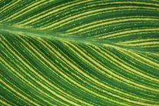 Free Leaf Close-up Stock Photos - 1254463