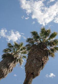 Free Palms Stock Photos - 1255433