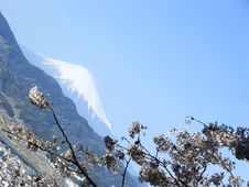 Free Mt. Fuji And Sakura Stock Photography - 1256092