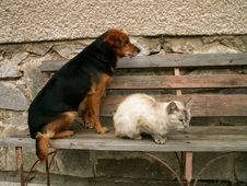 Free Cat And Dog Resting Royalty Free Stock Photography - 1256917