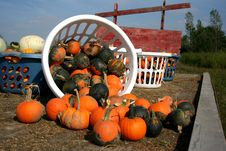 Free A Wagon-full Of Pumpkins Stock Photos - 1257673