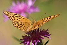 Free Butterfly Royalty Free Stock Photo - 1258405