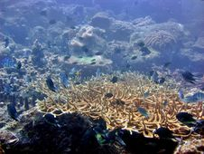 Free Coral Reef Stock Photography - 1259242