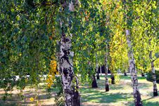 Free First Signs Of Autumn Royalty Free Stock Image - 1259746