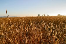 Free Agricultural Autumn Field Stock Photo - 1259850