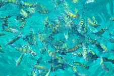 Free Fish In The Sea Royalty Free Stock Images - 1259889