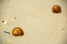 Free Beach And Snails Stock Photography - 1259992