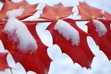 Free Winter Stock Image - 12506781